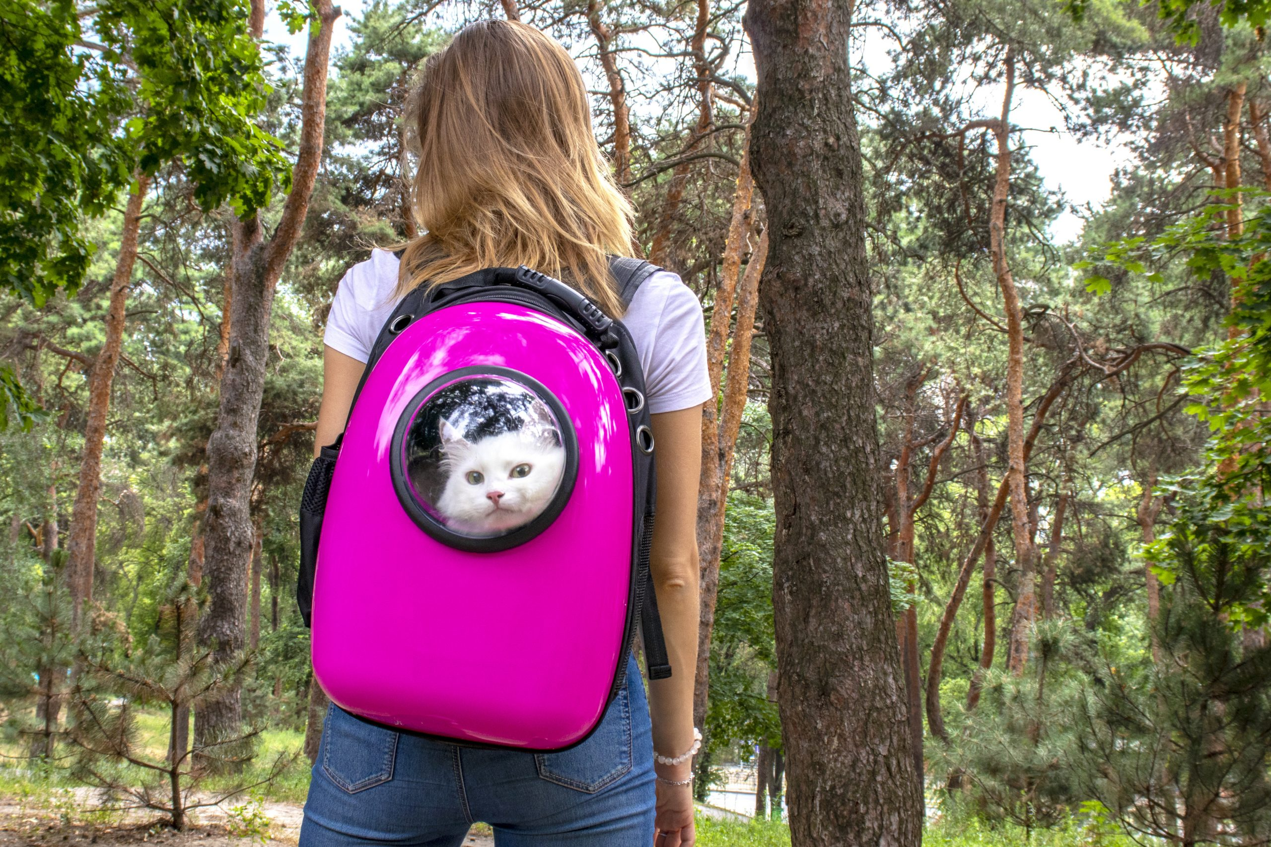 Photo of The 6 Best Cat Backpacks of 2020