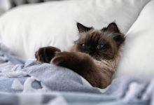 Photo of The 6 Best Cat Beds of 2020