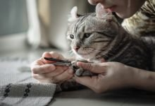 Photo of The Best Cat Nail Clippers