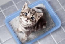 Photo of The Best Dust Free Cat Litters of 2020