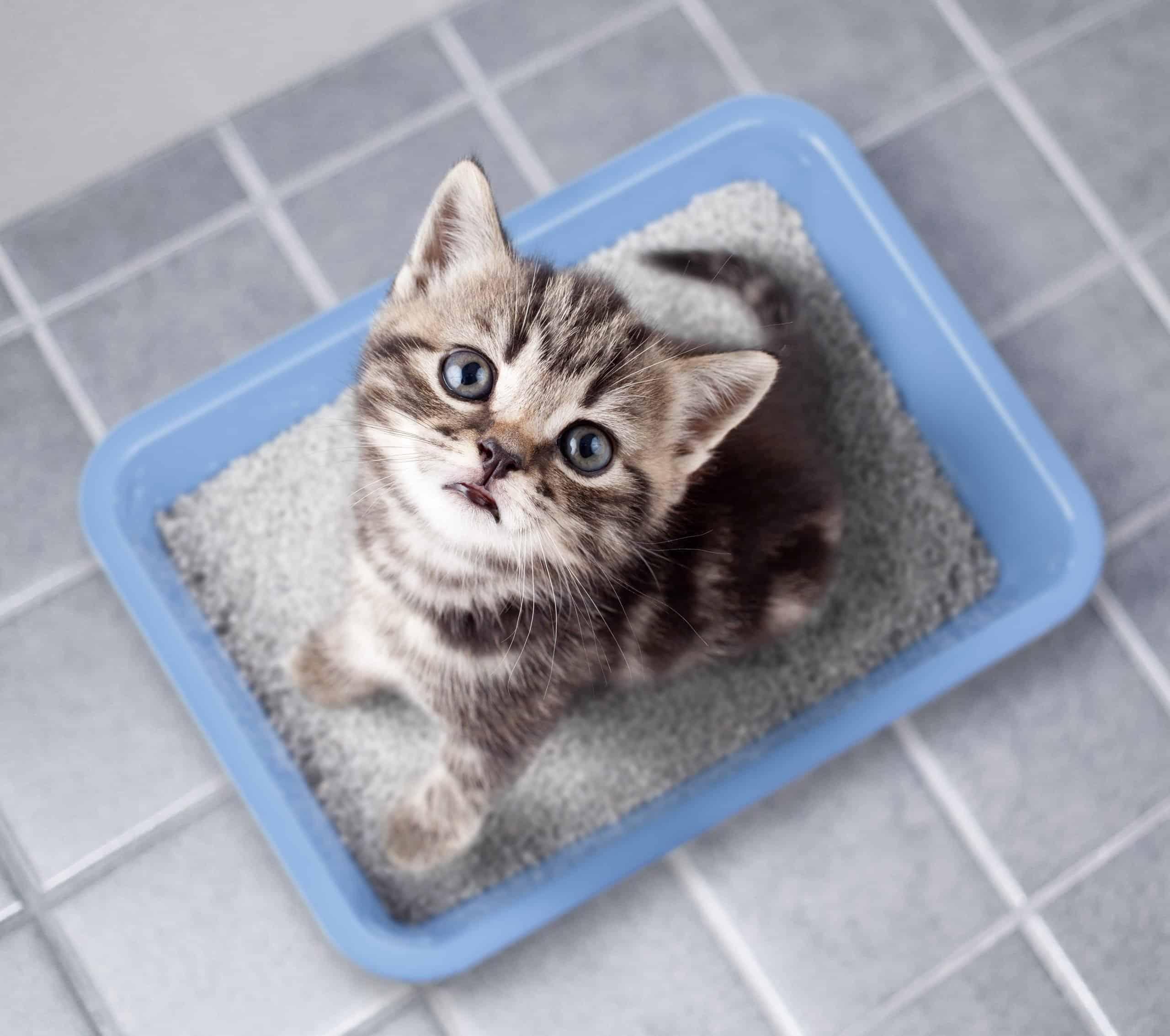 Dust Free Cat Litter