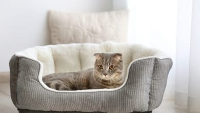 Photo of Best Cat Beds