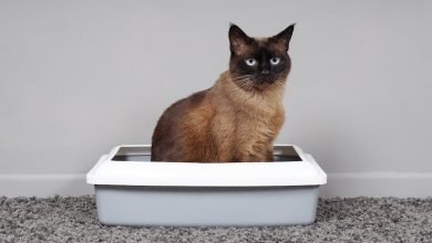 Photo of Best Cat Litter for Odor Control
