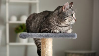 Photo of Best Cat Trees for Large Cats