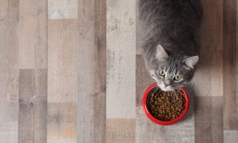 Photo of Best Foods for Cats with a Sensitive Stomach