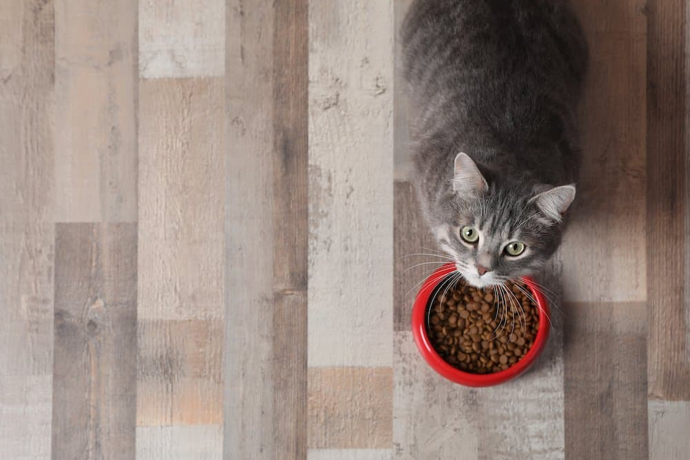 best foods for cats with a sensitive stomach